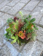 Fleshy_plants_2