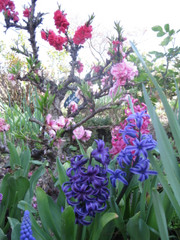 Gamu_garden