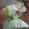 Chou_to_mimosa